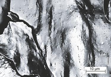 Micrographie électronique à balayage d'un